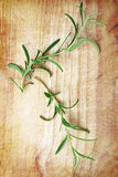 Rosemary. Branches on wooden table, still life Royalty Free Stock Image