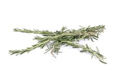 Rosemary brunches. Royalty Free Stock Photo