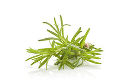 Rosemary bunch. Stock Images