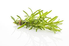 Rosemary bundle isolated. Royalty Free Stock Photography