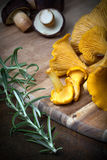 Rosemary with cantharellus. Yellow chanterelle and boletus Stock Image