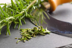 Rosemary chopped cutter slate Stock Image