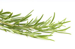 Rosemary da erva isolado no fundo branco Foto de Stock