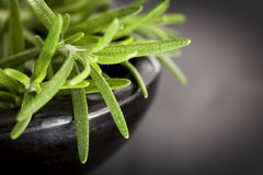 Rosemary in Dark Bowl over Slate Stock Images