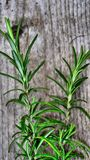 Rosemary displayed on wood Royalty Free Stock Photos
