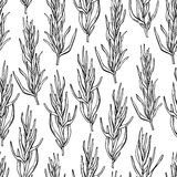 Rosemary  drawing seamless pattern. Isolated Rosemary plan. T with leaves. Herbal engraved style illustration. Detailed organic product sketch. Cooking spicy Stock Photos