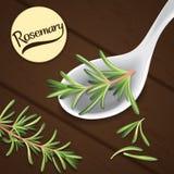 Rosemary en la cuchara Imagenes de archivo