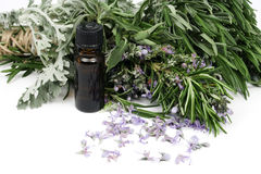 Rosemary essential oil Stock Photography