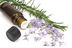 Rosemary essential oil Royalty Free Stock Photography
