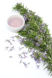 Rosemary essential oil for aromatherapy Royalty Free Stock Image