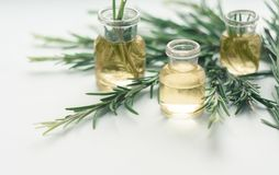 Rosemary essential oil in small bottles with a fresh rosemary twigs closeup, selective focus royalty free stock images