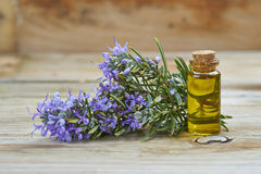 Rosemary essential oil Royalty Free Stock Images