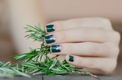 Rosemary in female hand with beautiful dark green Stock Photography