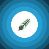 Rosemary Flat Icon isolata L'elemento attillato di vettore delle foglie può essere usato per i rosmarini, l'abete rosso, concetto Fotografia Stock Libera da Diritti
