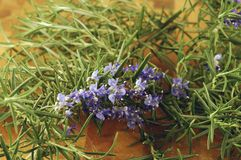 Rosemary Flowers Stock Afbeelding