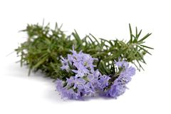 Rosemary with flowers Stock Images