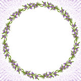 Rosemary flowers card Royalty Free Stock Image