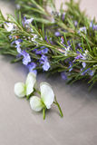 Rosemary and flowers Stock Images