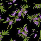 Rosemary flowers seamless texture Stock Image