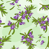 Rosemary flowers seamless texture Stock Photos