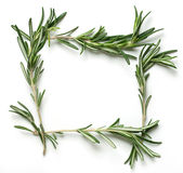 Rosemary frame Stock Photo