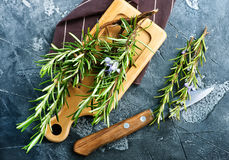 Rosemary. Fresh rosemary, herb on the wooden table Stock Photos