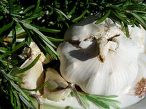 Rosemary + garlic Royalty Free Stock Photography