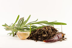 Rosemary, garlic, chili pepper and dried spices Royalty Free Stock Photos