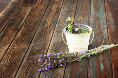 Rosemary and geranium plant on wooden table Stock Image