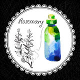 Rosemary. Health and Nature Collection. Aromatic rosemary oil (watercolor and graphic illustration Royalty Free Stock Photos