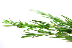 Rosemary herb Royalty Free Stock Photos