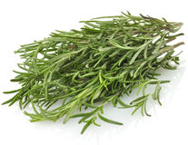 Rosemary Herb Stock Images