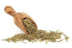 Rosemary Herb royalty free stock image