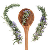 Rosemary Herb Royalty Free Stock Photography