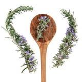 Rosemary Herb royalty free stock photography