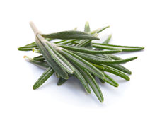 Rosemary herb Royalty Free Stock Photos