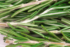 Rosemary herb close up view as background. Royalty Free Stock Photo