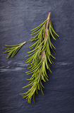 Rosemary herb on dark vintage tile slate Royalty Free Stock Images