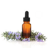 Rosemary Herb Essence Stock Image