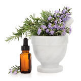 Rosemary Herb Essence Royalty Free Stock Photos