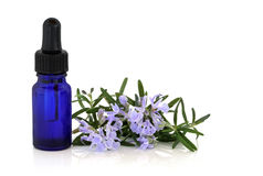 Rosemary Herb Essence and Flowers Royalty Free Stock Photo