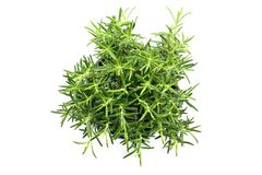 Rosemary herb flowerpot on white isolated background. Top view royalty free stock image