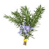 Rosemary Herb Flowers Royalty Free Stock Photography