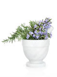 Rosemary Herb Flowers Royalty Free Stock Image