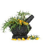 Rosemary Herb and Gorse Flowers. Rosemary herb leaf sprigs and wild gorse flowers in a granite mortar with pestle, over white background Stock Photography