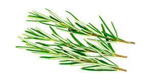 Rosemary herb isolated on white Stock Image