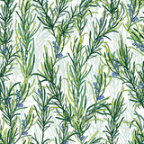 Rosemary herb pattern Royalty Free Stock Photos