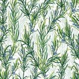 Rosemary herb pattern Royalty Free Stock Photos