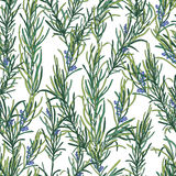 Rosemary herb pattern Royalty Free Stock Photography