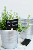 Rosemary herb in a planter with chalk board Royalty Free Stock Photo
